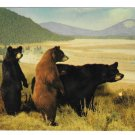 American Black Bear Vintage Postcard Lowman Photo H. S. Crocker