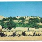 Afghanistan Shepherd Kabul Village Sheep Vintage Postcard