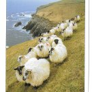 Ireland Sheep on Cliff Vintage John Hinde Postcard 4X6