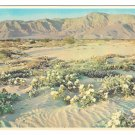 Arizona Gardens of the Desert Flowers Vintage Petley 4X6 Postcard