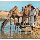 Tunisia Ile De Djerba Oasis Camels Vintage Ismail 4X6 Postcard