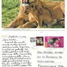 Africa Kenya to US East African Airline Label on John Hinde Lionness Postcard 1979
