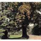 UK Oxford New College in the Garden Vintage Valentine Series Postcard