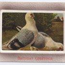 Vintage Embossed Birthday Postcard Pigeons Doves Pidgeons ca 1910