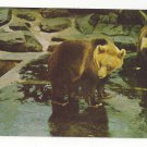 Washington DC National Zoo Brown Bear Vtg Postcard Ursus Arctos