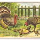 Thanksgiving Turkey Family Poults Chicks Gold Embossed Julius Bien Postcard
