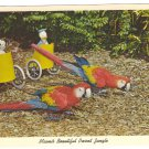 Parrot Jungle Miami FL Bumper and Jasper performing Macaws 1961 Curteich Postcard