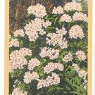 Rhododendron WA Washington State Flower Vtg Linen Postcard