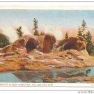 WY Yellowstone National Park Grotto Geyser Vtg J.E. Haynes Postcard