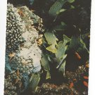Tropical Caribbean Fish Speckled Snapper Pagres Mouchetees Vtg Postcard 4X6