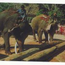Elephants Thailand Working pushing Timbers with Trunks Large Tusks Vintage Postcard