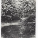 RPPC Wooded Scene pool at end of road Scenic Landscape Kodak Real Photo Postcard