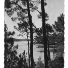 France Lac Marin Hossegor Landes View Thru Pines Glossy Photo YVON Postcard 4X6