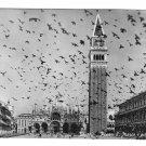 Italy Venezia Venice Piazza San Marco Doves St Marks Square Glossy Photo Postcard 4X6