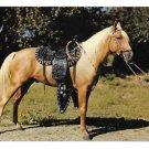 Prize Palomino Saddled Horse Vintage Baxtone Amarillo Texas Postcard