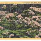 Pennsylvania State Flower Mountain Laurel Vintage Curteich Linen Postcard