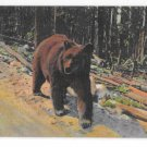 Bear Hitch Hiker Yellowstone National Park Vintage Curteich Animal Postcard