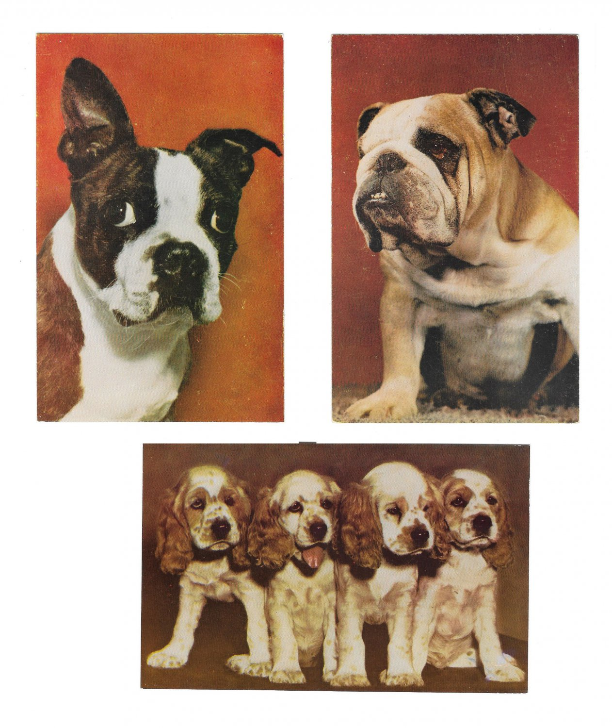 Dogs Cocker Spaniels Bulldog Boston Terrier 3 Mike Roberts Postcards