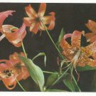 Flowers Wild Tiger Lily Blue Ridge and Great Smoky Mountains Vintage Postcard
