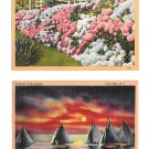 NJ Cape May Flower Hydrangea Sailboats Sunset 2 Vintage Tichnor Linen Postcards