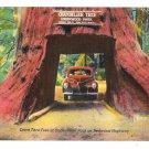 CA Drive thru Chandelier Redwood Tree Underwood Park Vntg Linen Postcard