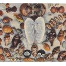 FL Fort Myers Florida Sea Shells 1948 Vintage Curteich Linen Postcard