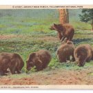 Yellowstone National Park Grizzly Bear Family Haynes Inc 1948 Linen  #27367 Curteich