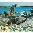 Maine Coast Sea Gulls Winged Beach Combers Vintage Postcard Photo W P Moore