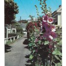Massachusetts Hollyhock Ln Provincetown Holly Hock Lane Vintage Postcard