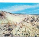 Massachusetts Sand Dunes Sandwich Beach Cape Cod MA Vintage Postcard