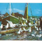 Feast of the Sea Gulls Dock Boats Birds Vintage Mike Roberts Postcard