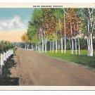 New England Birch trees Maine Roadside Birches Vintage Linen Postcard