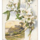 Easter Greetings White Narcissus Country Scene 1908 Vintage Winsch Back Postcard