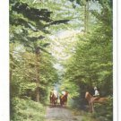 Eagles Mere PA Allegheny Mountains Horse Trail Riding on Bridle Path Vntg Postcard