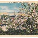 Washington State Apple Blossom Time Vtg C P Johnston Linen Postcard