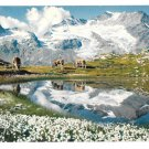Switzerland Wollgras See Piz Cambrena Alps Bernina Pass Mountain Range 50s Postcard