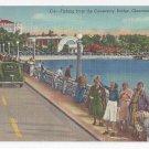Clearwater FL Fishing from Causeway Bridge Curteich 1951 Linen Postcard