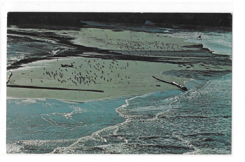 Mendocino Coast California Flood Tide Entering Big River Vintage CA 70s Postcard