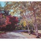 Winding Road Thru Autumn Woods Nature Dexter Beauty Scene No 25 Vintage 50s Postcard
