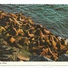 Stellar Sea Lions Rocks Ocean Vintage Continental 4X6 postcard 1970s