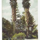 Pasadena CA Twin Palms Orange Grove Ave Vintage PCK Paul C. Koeber California Postcard