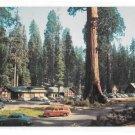 CA Sequoia National Park Giant Forest Village Stores Tourist Lodge Vintage Postcard