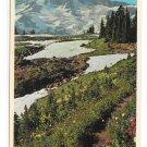 Upper Paradise Valley Mt Ranier National Park Washington State Vintage Postcard