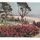CA Santa Monica Palisades Park Wilshire Blvd Ocean Ave Garden Beautiful Cannas Postcard