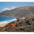 CA Monterey Coastline Flowers Native Plants Big Sur Coast Highway Vntg Mike Roberts Postcard