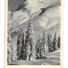Neuen Jahr German Real Photo New Years Postcard RPPC Snowy Mountain Trees