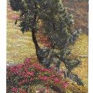 Alpen Flora Alpine Flowers Rhododendron Nenke Ostermaier Serie L No 520 Photochrome Postcard