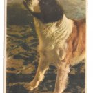 E.A. Schwerdtfeger Kunstverlag Saint Bernard Dog EAS 9654 Berlin Postcard