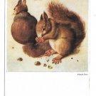 Albrecht Durer Eichhornchen Squirrels Franz Hanfstaengl Munich 4X6 Art Postcard