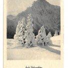 RPPC Christmas Card Frohe Weihnachten Snow Fir Trees Tirol Austria Postcard